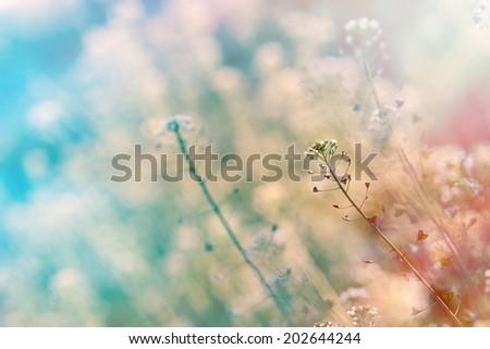 Beautiful nature - little white flowers - stock photo