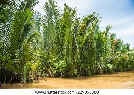 Beautiful nature of Mekong Delta in Vietnam - stock photo