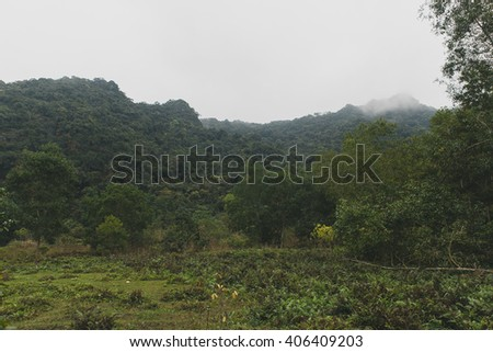 Beautiful nature of Vietnam forest greens landscape
