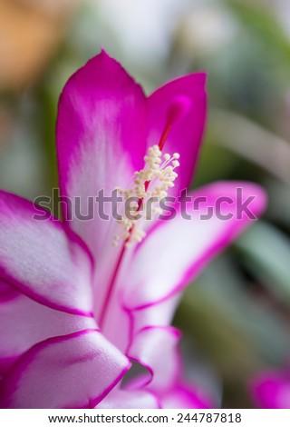 Beautiful nature purple flower close up - stock photo