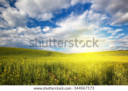 Beautiful nature sunny landscape