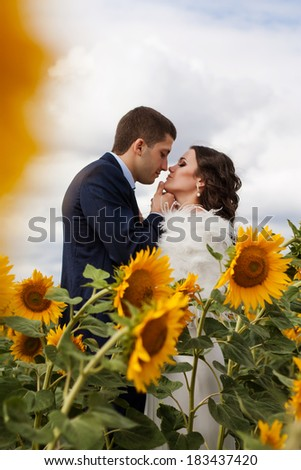 Beautiful newlyweds kissing in a field of sunflowers. Happy bride and groom. - stock photo