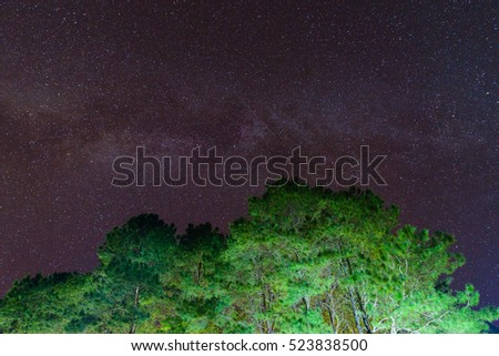 Beautiful night sky, the Milky Way and pine trees in upper view for background texture
