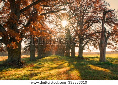 Beautiful oak alley in autumn at sunrise