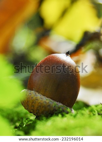 Beautiful oaks under a huge oak tree.Check my portfolio for more beautiful nature photographs. - stock photo