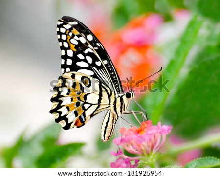 Beautiful of butterfly in garden