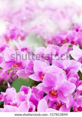 beautiful of tropical orchid flower blooming show shallow depth of field use for beuatiful background and backdrop - stock photo