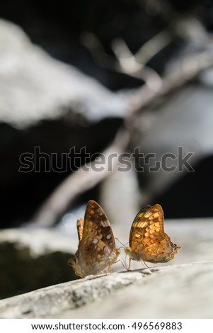 Beautiful Orage butterfly on the rocks near water nature