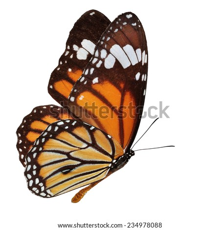 Beautiful orange butterfly flying isolated on white background  - stock photo
