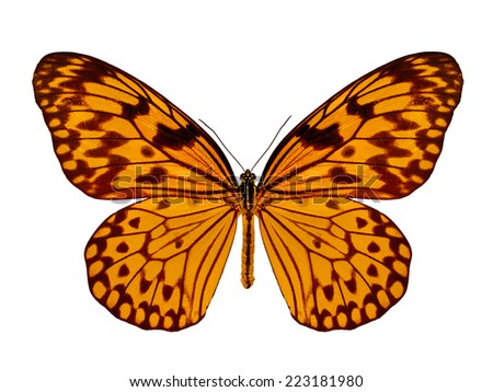 Beautiful orange butterfly isolated on white background.