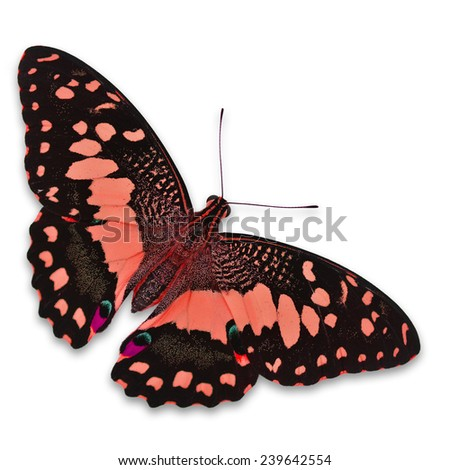 Beautiful orange butterfly isolated on white background - stock photo