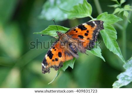 beautiful orange butterfly sitting on a green leaf