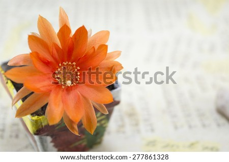 Beautiful orange cactus flower in a decoupage flowerpot - stock photo
