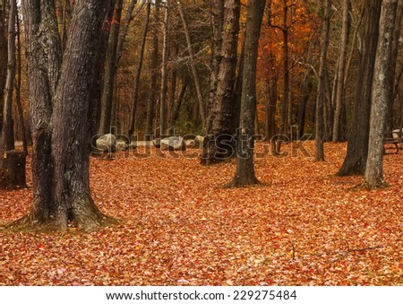 Beautiful orange colors of Autumn in a wooded forest. - stock photo