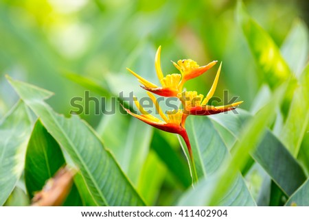 Beautiful orange flowers - stock photo
