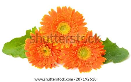 beautiful Orange gerbera flower isolated on white background - stock photo