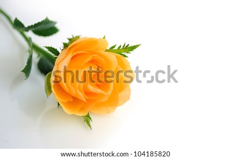 Beautiful orange roses background - stock photo