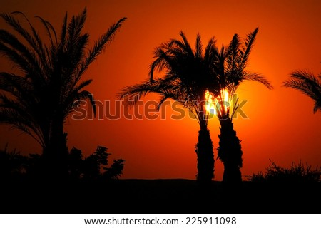 beautiful orange sunset between palm trees  in Egypt - stock photo