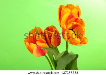Beautiful orange tulips on color background - stock photo