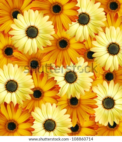 Beautiful orange-yellow floral background made from wild daisy flowers - stock photo