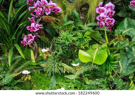Beautiful Orchid And Paphiopedilum Flowers In The Forest - stock photo