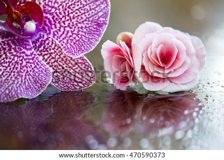Beautiful orchid and rose flower background with copy space
