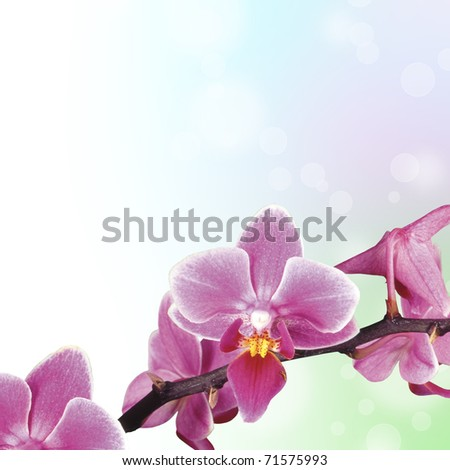 Beautiful Orchid background - stock photo