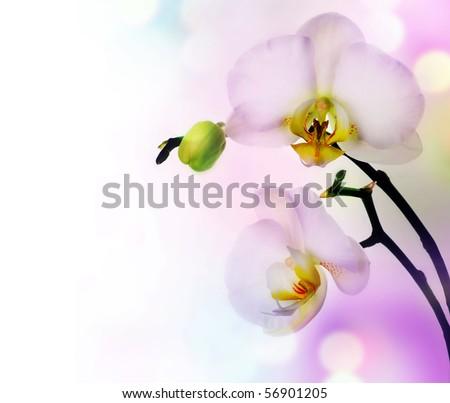 Beautiful Orchid border - stock photo