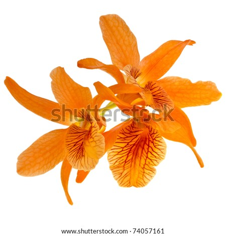 beautiful orchid close up  isolated on white background - stock photo