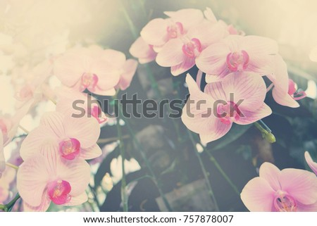 Beautiful Orchid flower in tropical garden close up. Floral background.