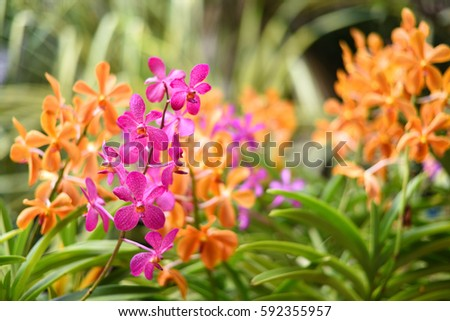 Spring Garden Stock Images, Royalty-Free Images & Vectors ...