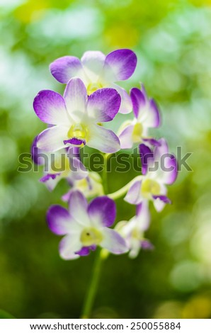 beautiful orchid flower with bokeh background