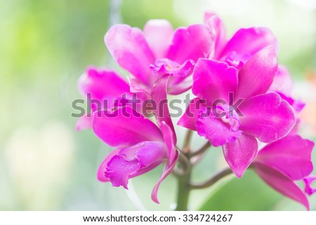 Beautiful orchid flowers closeup