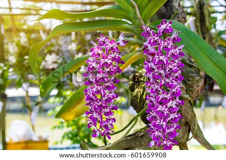fresh orchids stock images, royaltyfree images  vectors, Beautiful flower