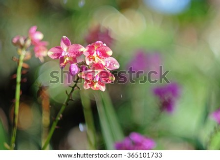 beautiful Orchid in garden