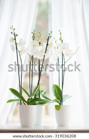Beautiful orchid in white vase on windowsill decorates clean room - stock photo