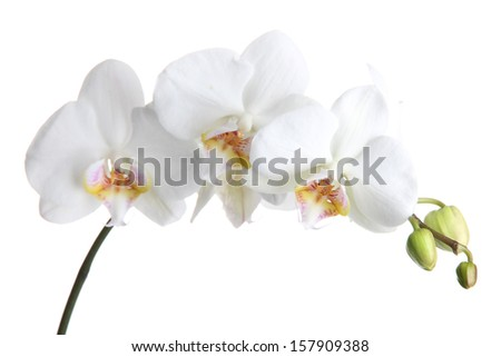 beautiful orchid, isolated on white - stock photo