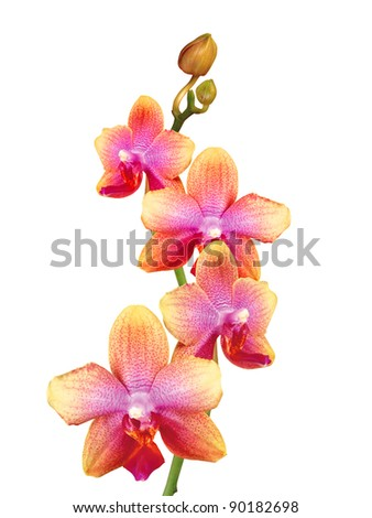 beautiful orchid isolated on white background - stock photo