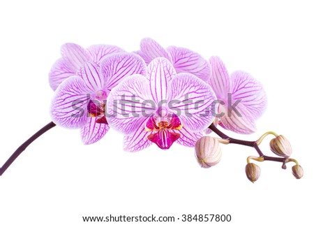 Beautiful Orchid. Isolated with a white background - stock photo