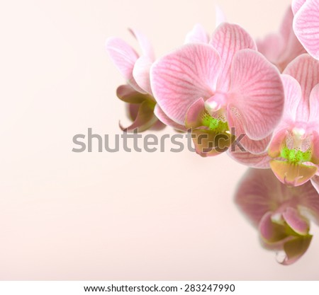 beautiful orchid on a pink background closeup macro - stock photo