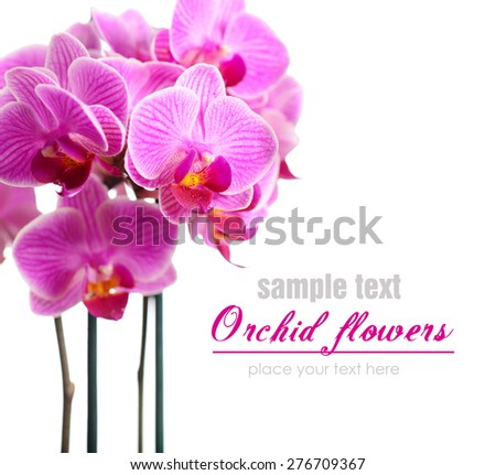beautiful orchid on a white background closeup