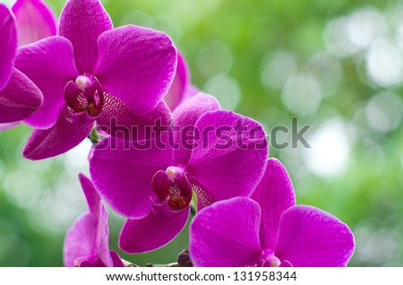 beautiful orchid on green background