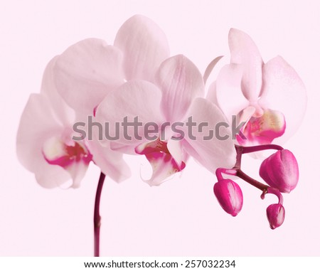 Beautiful orchid on light background