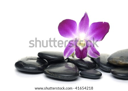 Beautiful orchid on pebbles