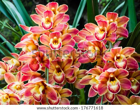 Beautiful orchid - phalaenopsis, against natural green background in greenhouse - stock photo