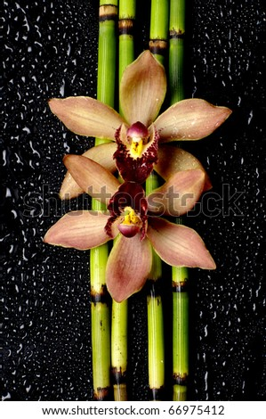 Beautiful orchid with bamboo grove on pebble - stock photo