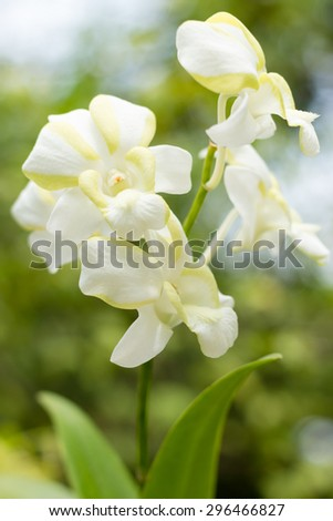 beautiful orchid with bokeh effect