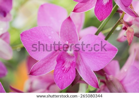 Beautiful Orcid in the garden - stock photo
