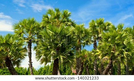 Beautiful palm garden.