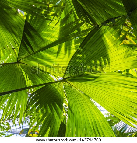 beautiful palm leaves of tree in sunlight - stock photo